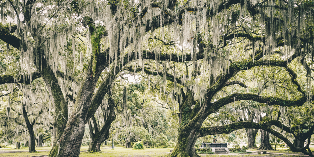 Things to Do in New Orleans: Outdoor Attractions and Activities