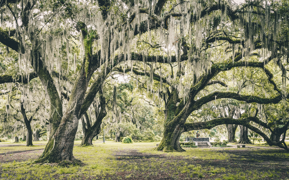 Things To Do In New Orleans Outdoor Attractions And