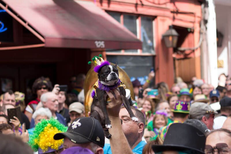 A Dog-Friendly Guide to the New Orleans French Quarter and Arts District